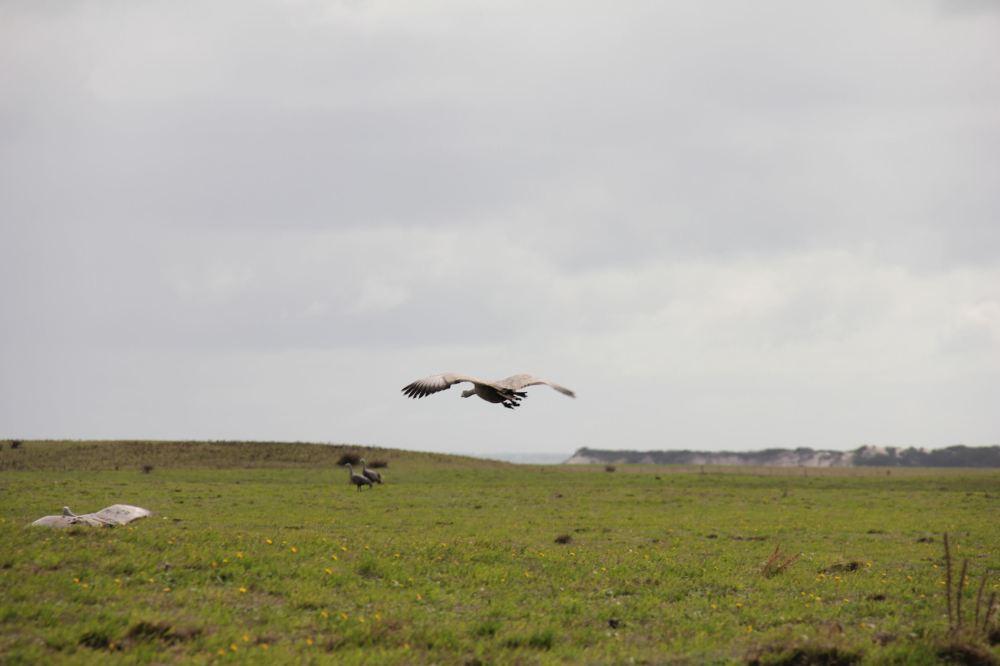 IMG_5111-geese